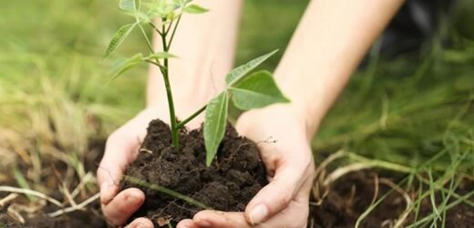 A smart initiative to protect our forest is just plant tree.