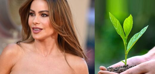 Sofia Vergara donates $1.4 million for plant trees.