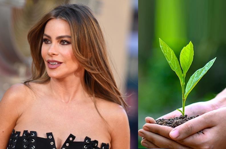Sofia Vergara donates $1.4 million for plant trees.